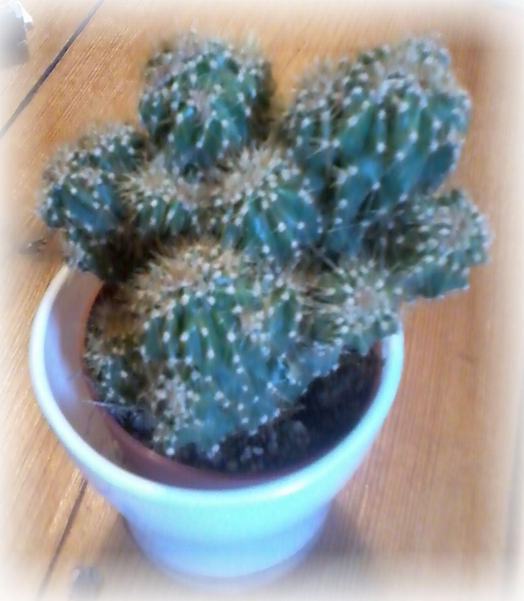 Foto Kaktus